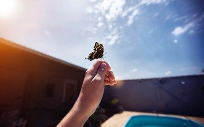 #Concurs   Bianca Stratulat – Țara Fluturilor